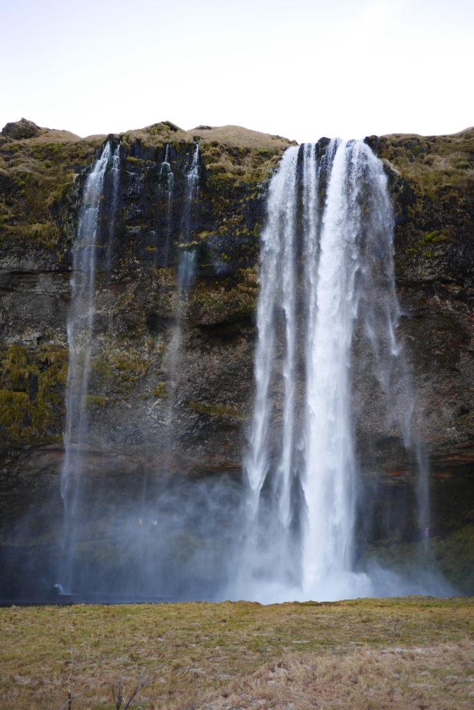 Islande fauve